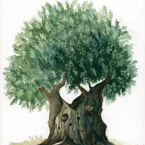 Gethsemane Olive Tree by Shaima' Farouki