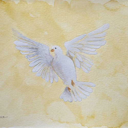 Jerusalem Dove by Ahed Izhiman